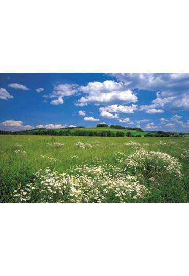 painel-fotografico-8-partes-meadow-cod-8-254