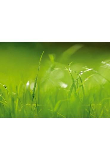 painel-fotografico-8-partes-paisagens-green-cod-8-886