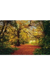 painel-fotografico-4-partes-caminho-entre-floresta-cod-4-068