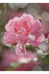 painel-fotografico-4-partes-bouquet-cod-4-713